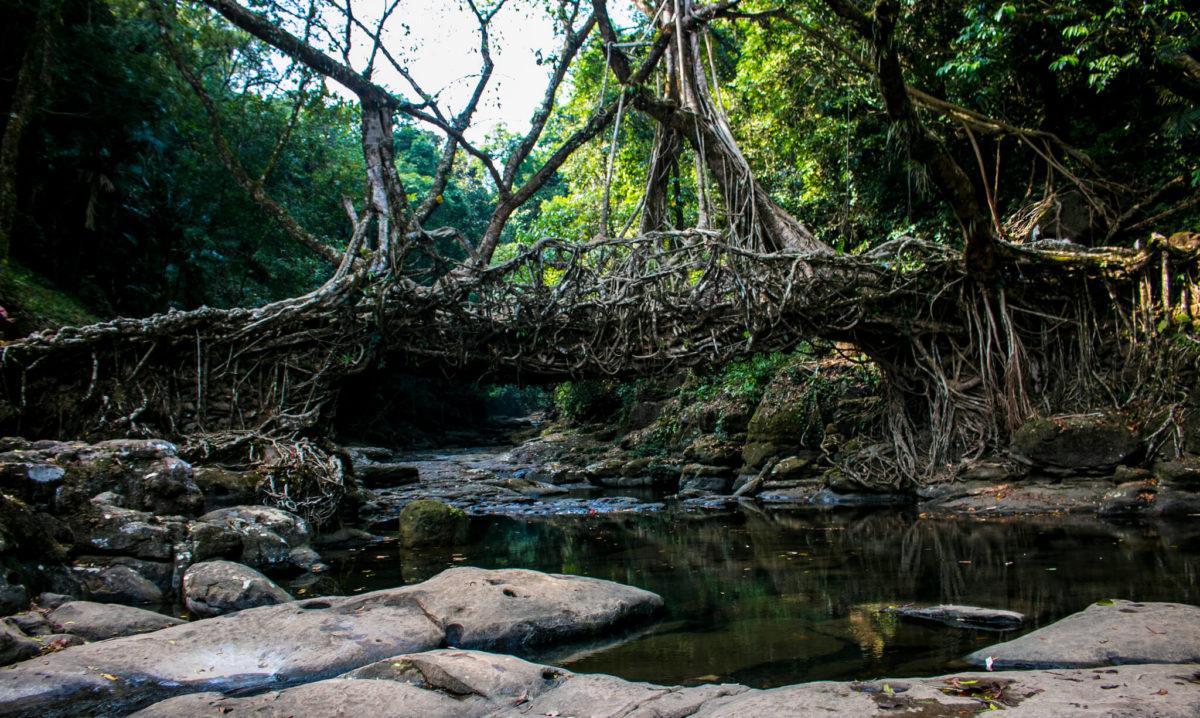 living route bridge
