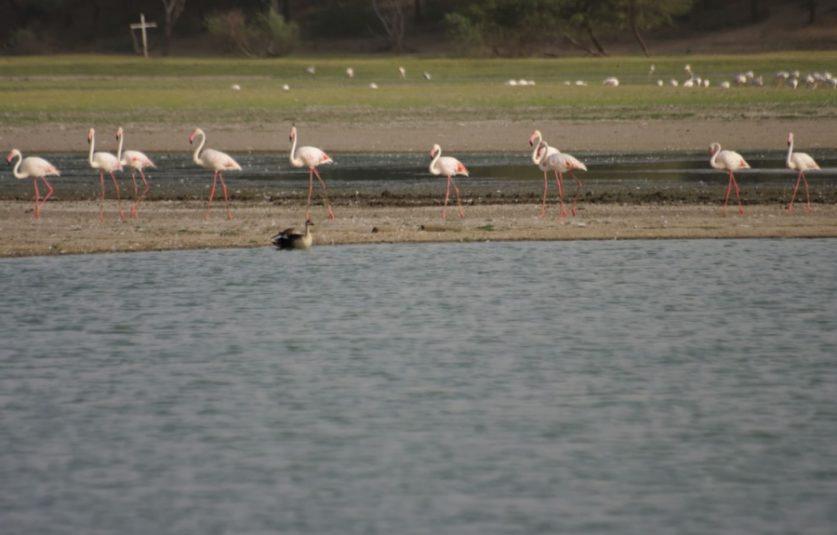 Thol lake gujarat