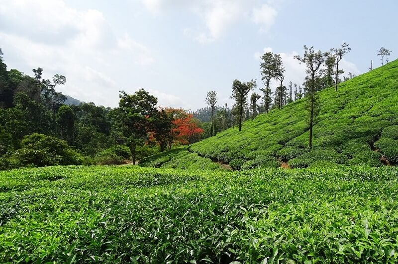 Chikmagalur among the attractive places to visit near bangalore