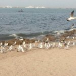 13 Best Places to Visit & Things to Do in Porbandar