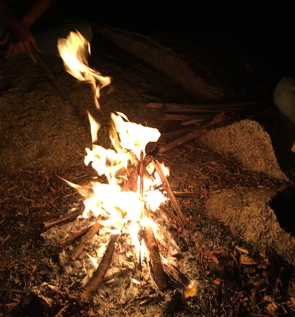 Campfire in forest area