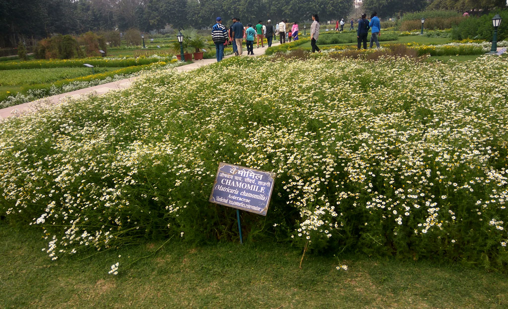 Herbal Garden at Mughal Garden Delhi